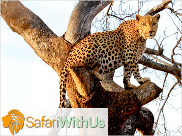 Copywriting and Marketing | Safari With Us